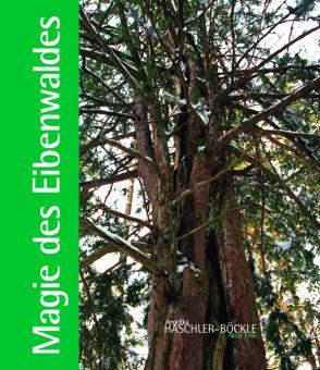 Magie des Eibenwaldes
